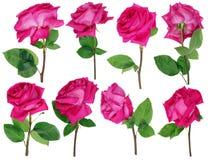 Les roses roses de mort de séchage- d'un bouquet de mariage Photographie stock libre de droits