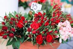 Les roses rouges et roses et les feuilles vertes Photo libre de droits