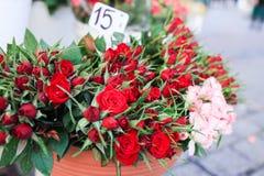 Les roses rouges et roses et les feuilles vertes Photo stock