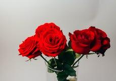 Les roses rouges sur un fond gris, et le vert part, support dans un vase transparent Photographie stock libre de droits