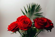 Les roses rouges sur un fond gris, et le vert part, support dans un vase transparent Photos libres de droits