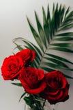 Les roses rouges sur un fond gris, et le vert part, support dans un vase transparent Photo libre de droits
