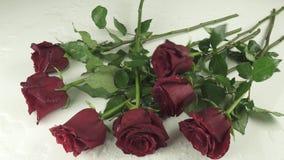 Les roses rouges tombant sur le fond blanc avec le mouvement lent de l'eau stockent la vidéo de longueur banque de vidéos