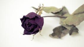 Les roses roses se défraîchissent Réfléchit tristement le jour du ` s de Valentine Le mauvais de Valentine image stock