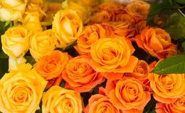 Les roses se ferment vers le haut Photographie stock libre de droits