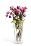 les roses se sont défraîchies Photo libre de droits