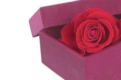 Les roses sont boîte rouge de tissu Photos libres de droits