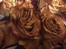 Les roses sont toutes les couleurs image libre de droits