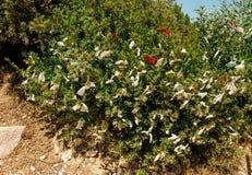 Les rubans de ` d'amour de ` sont partis sur un arbre à l'entrée à la plage d'Aphrodite Rock en Chypre Photo stock