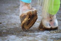 Les sabots du cheval et des bandages sur les jambes de derrière Images libres de droits