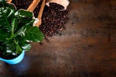 Les sacs de jute et les récipients en bois ont rempli de haricots de cofee Photographie stock libre de droits