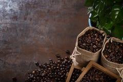 Les sacs de jute et les récipients en bois ont rempli de haricots de cofee Images libres de droits