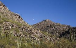 Les Saguaros ont clouté la montagne avec la vue de la lune entre les crêtes Photographie stock