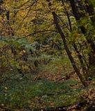Les saisons sont automne Image libre de droits
