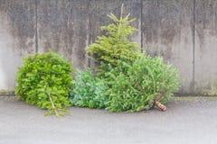 Les sapins verts traditionnels d'arbres de Noël sur la rue à Noël assaisonnent Photographie stock libre de droits