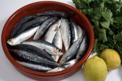 Les sardines panent et la verticale de tomate Images libres de droits