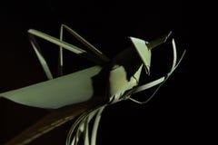 Les sauterelles ont fait le ‹d'†de ‹d'†des feuilles de noix de coco Images stock
