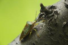 Les scarabées Photographie stock