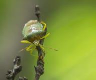 Les scarabées Photos stock
