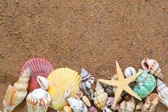 Les Seashells encadrent sur le sable image libre de droits
