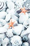 Les Seashells ont modifié la tonalité. photo libre de droits