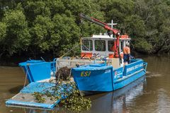 Les services environnementaux australiens nettoie la rivière près de Parramatta Images stock