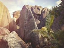 Les Seychelles tropicales Palmiers sur la La Digue Image stock
