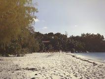 Les Seychelles tropicales Palmiers sur la La Digue Photographie stock libre de droits