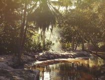 Les Seychelles tropicales Palmiers sur la La Digue Images libres de droits