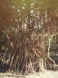 Les Seychelles tropicales Palmiers sur la La Digue Images stock