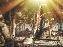 Les Seychelles tropicales Palmiers sur la La Digue de thе Photos libres de droits