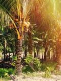 Les Seychelles tropicales Palmiers sur la La Digue de thе Images stock