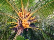 Les Seychelles tropicales Palmiers sur la La Digue Mahe Photographie stock