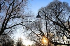 Les silhouettes d'arbre et le réverbère et le soleil contre le ciel bleu sur le coucher du soleil dans la ville se garent Image libre de droits