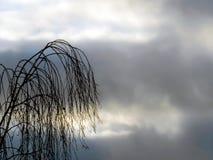 Les silhouettes du bouleau s'embranche contre le ciel de soirée images stock