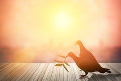 Les silhouettes du vol ont plongé en ciel rougeoyant rouge de coucher du soleil colombes dans l Image stock