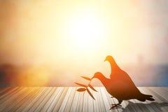 Les silhouettes du vol ont plongé en ciel rougeoyant rouge de coucher du soleil colombes dans l Photo stock