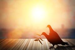 Les silhouettes du vol ont plongé en ciel rougeoyant rouge de coucher du soleil colombes dans l Photographie stock