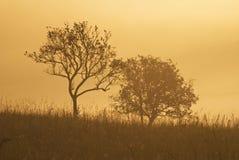 Les silhouettes foncées des arbres Images libres de droits