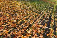 Les sillons rament le modèle avec la feuille d'érable orange et l'herbe verte sur le champ labouré par automne foncé Champ labour Images stock