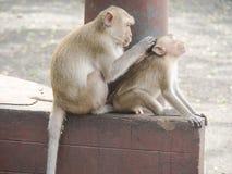Les singes photo libre de droits