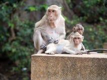Les singes images libres de droits