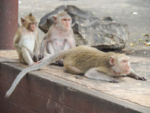 Les singes Image stock