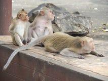 Les singes image libre de droits