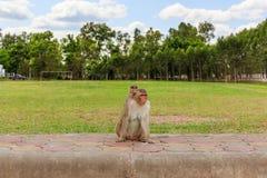 Les singes et sa mère Photographie stock