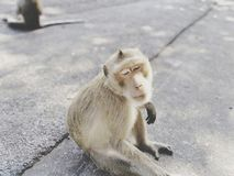 Les singes mignons se reposent confortablement sur la route photos stock