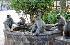 Les singes sont lors d'une réunion avec le rafraîchissement léger à un parc photographie stock