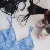 Les sous-vêtements des femmes de dentelle de lingerie sur le plan rapproché blanc de fond Lingerie sexy, Image libre de droits