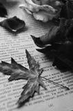 Les souvenirs languissent dans le livre Photographie stock libre de droits