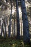 Les Sunrays refroidissent des joncteurs réseau Photo stock